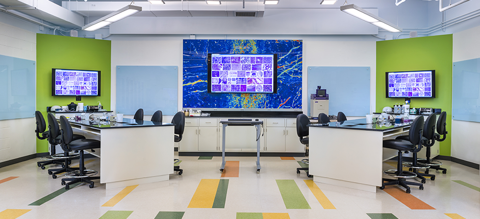 HHMI Lab Feature Image